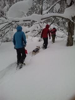 フカフカの新雪