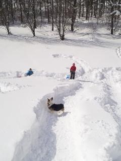 今日も雪遊び